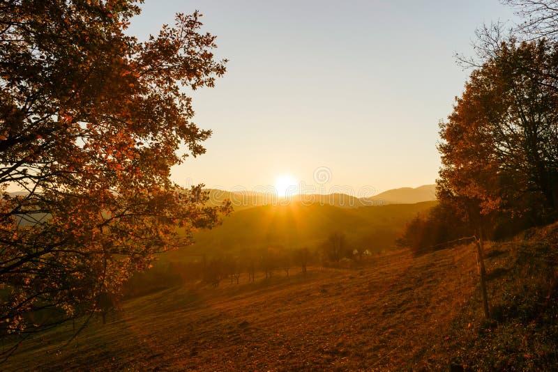 自然的秋天颜色在阿尔萨斯、五颜六色的叶子和fgorests的 库存照片
