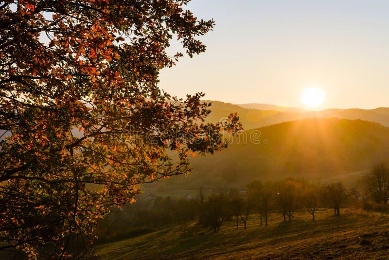 自然的秋天颜色在阿尔萨斯、五颜六色的叶子和fgorests的 免版税库存照片
