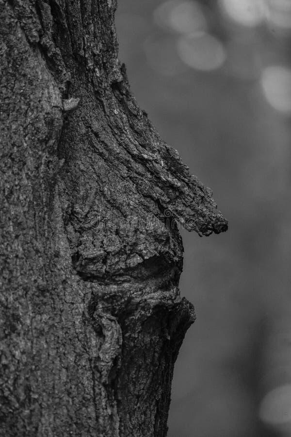 自然的面孔 图库摄影