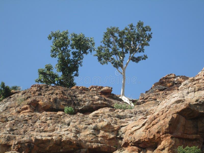 自然的Wow魔术树和岩石 库存照片