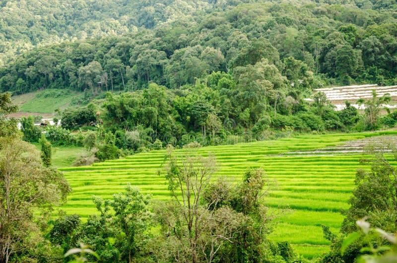 Download 自然看法在国家村庄,泰国 库存照片. 图片 包括有 聚会所, 印度尼西亚, 绿色, 有机, 热带, 种植园 - 62525446