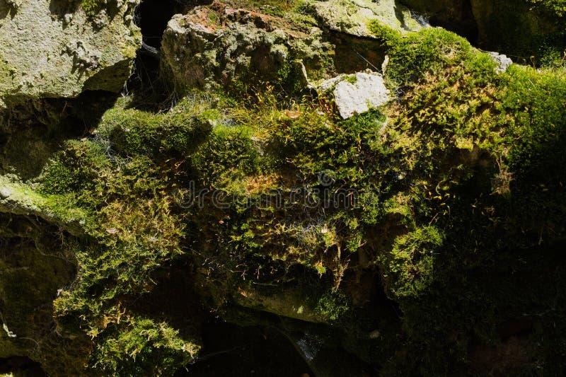 自然石头老石砖墙与青苔的拂去蜘蛛网和泥被构造的背景的灰尘 库存照片