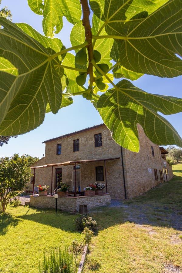 自然砖议院在无花果树的叶子的后 免版税库存图片