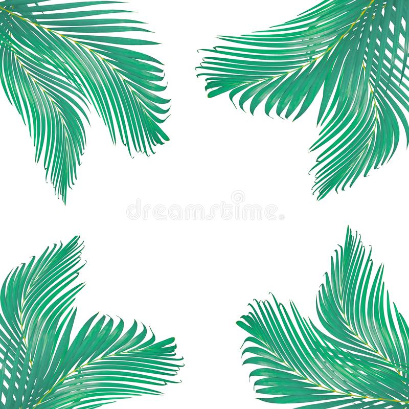 自然离开由绿色棕榈叶做的文本的框架被隔绝 库存图片