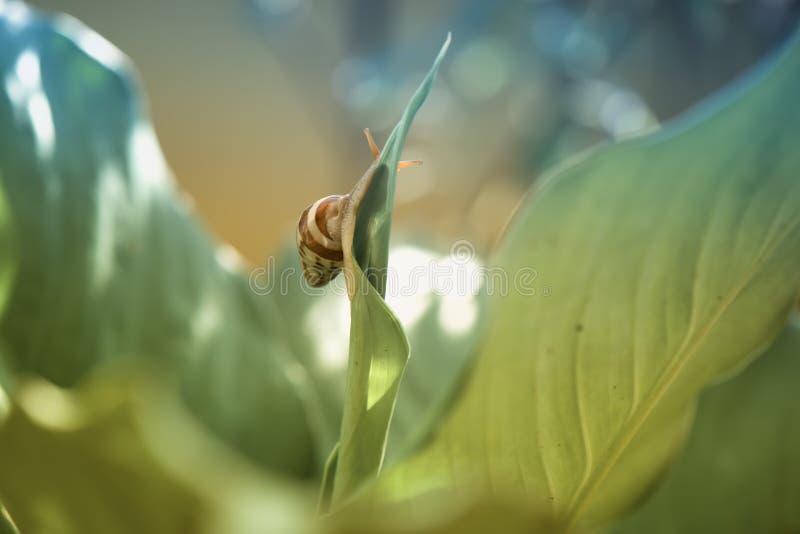 自然秀丽与蜗牛的 库存图片