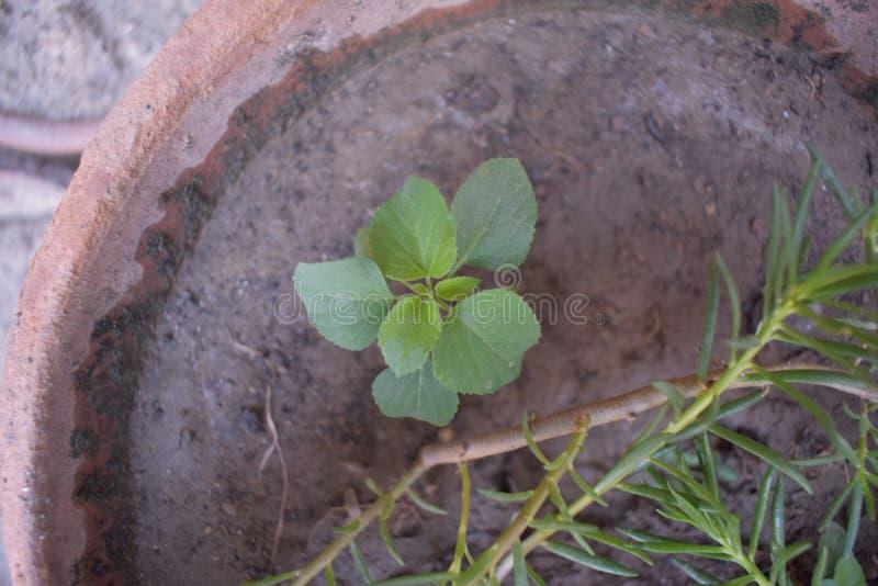 自然秀丽作为植物的 库存图片
