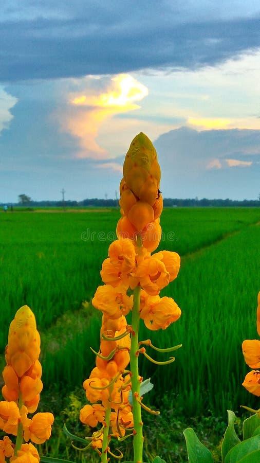 自然秀丽在印度 库存照片