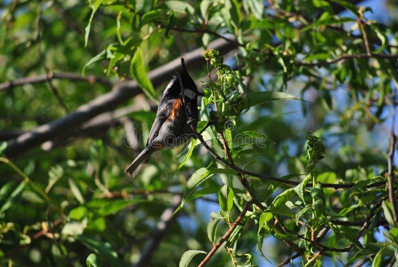 自然秀丽在喀拉拉 库存照片