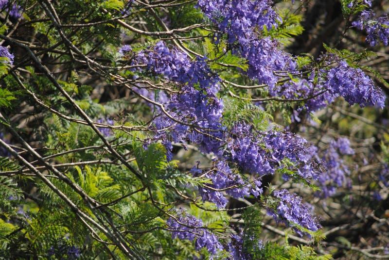 自然秀丽在喀拉拉 图库摄影