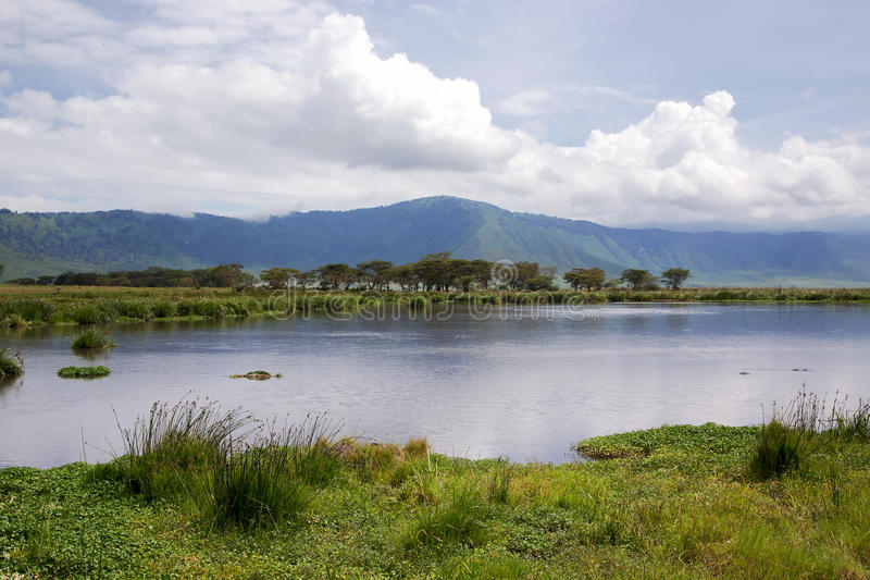 自然秀丽在曼雅拉湖附近的有河马的 免版税图库摄影