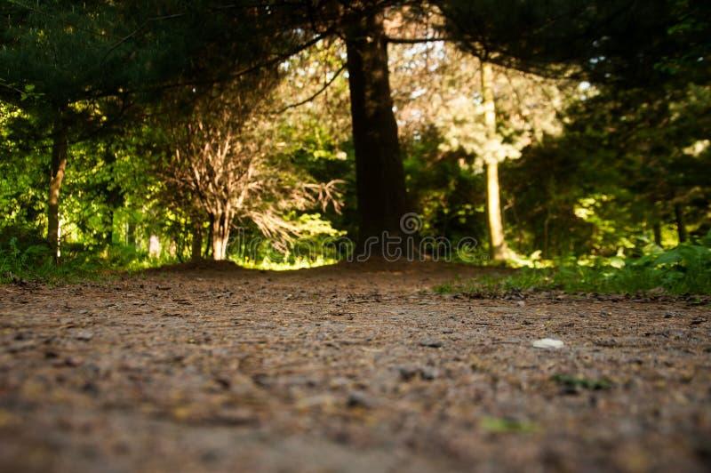 自然秀丽的照片  免版税库存图片
