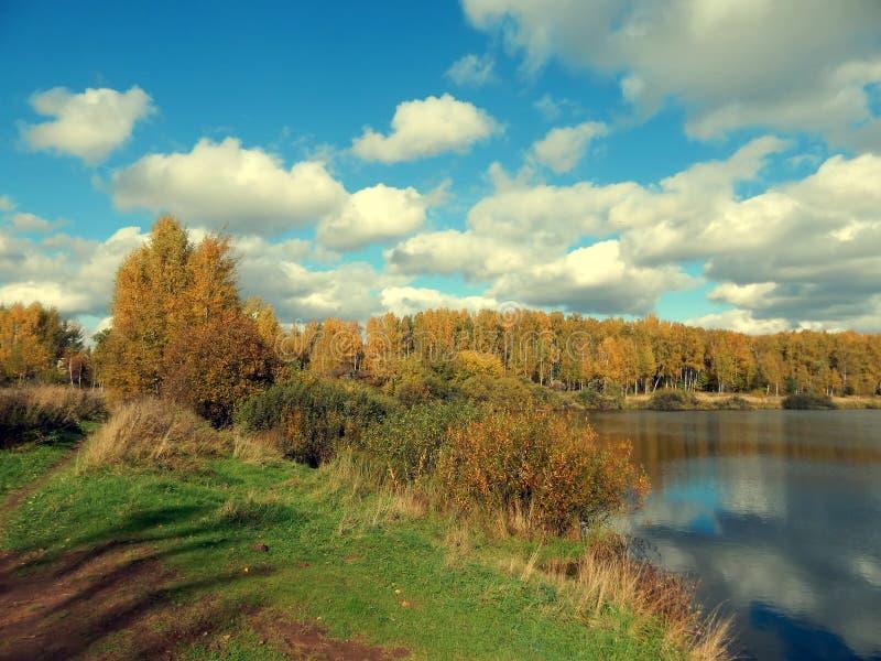 自然秋天风景在河的有黄色的留下特写镜头 库存照片