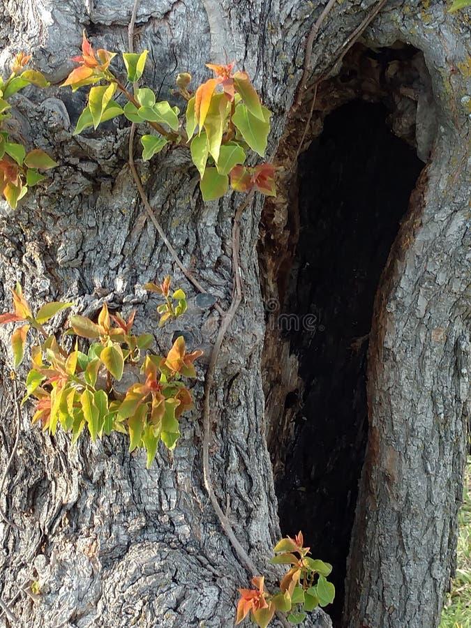 自然秘密黑暗的房子 库存照片