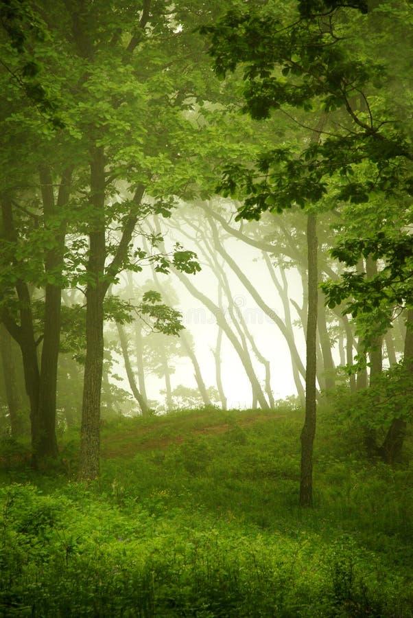 自然窗口,森林框架 免版税库存照片