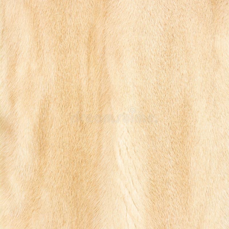 自然米黄发光的毛皮纹理  库存照片