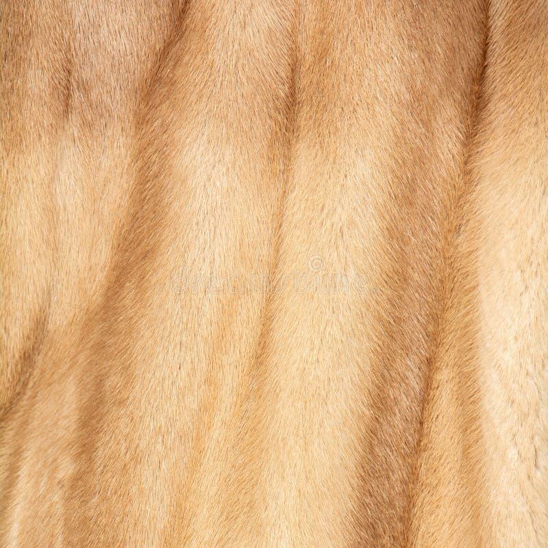 自然红色和米黄和棕色毛皮纹理  免版税图库摄影