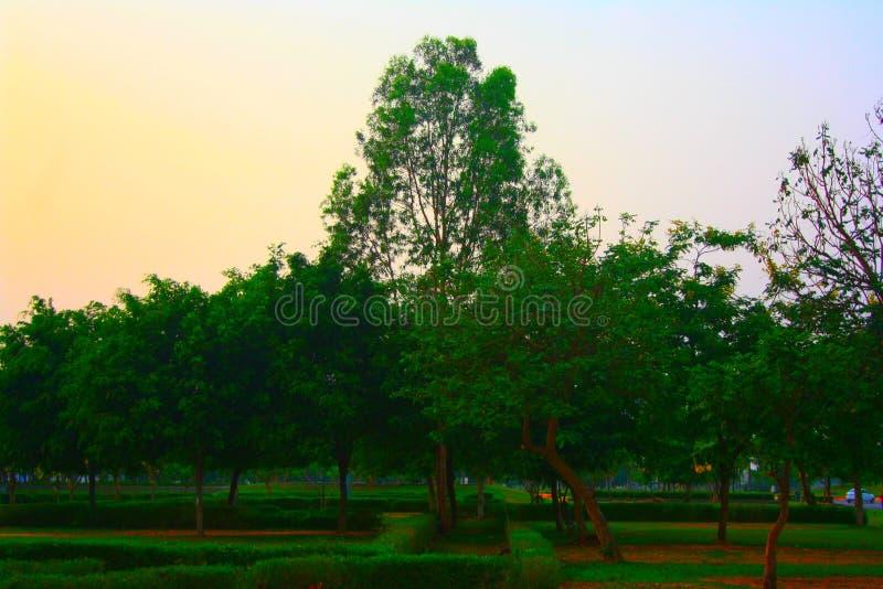 自然绿叶树 库存图片