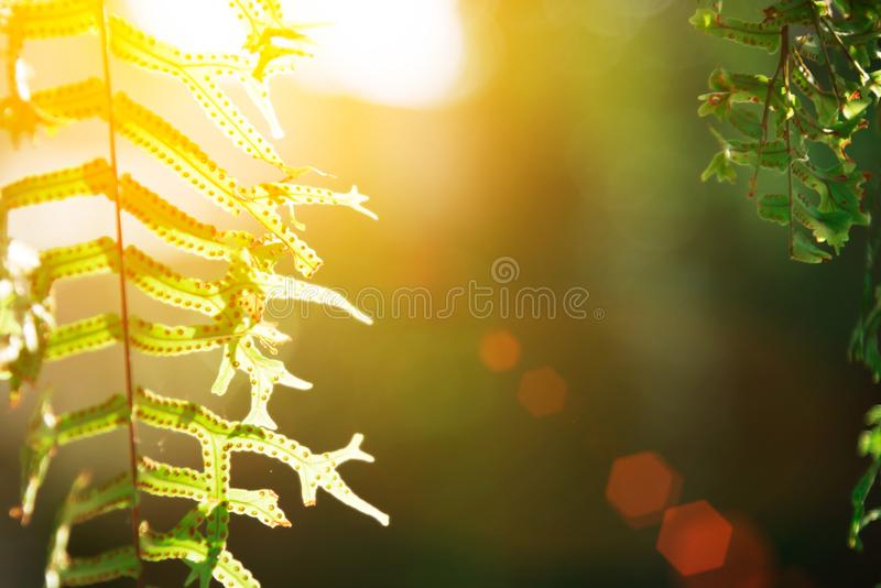 自然绿色留下背景 摘要被弄脏的夏天绿色lu 免版税库存照片