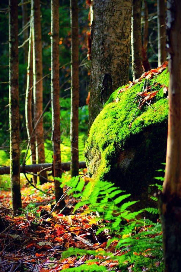 自然绿色 免版税库存图片