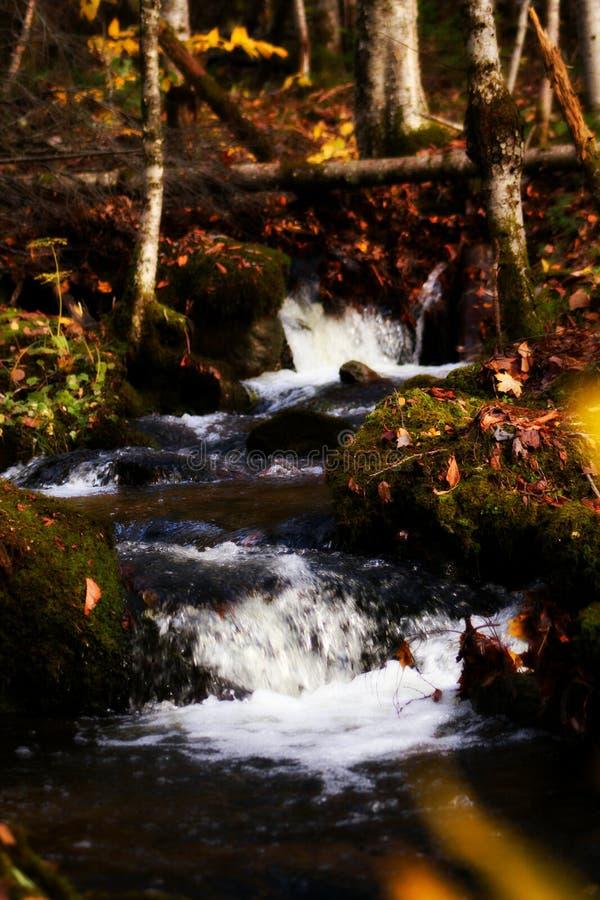 自然绿色 免版税库存照片