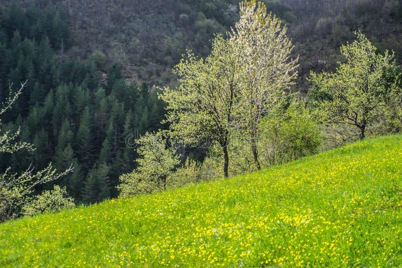 自然美人美丽的景色  美好的春天风景的看法 美丽的常青树在背景中 库存图片