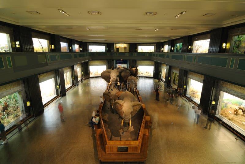 自然美国历史记录的博物馆 免版税库存照片