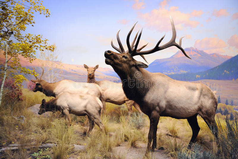 自然美国收集历史记录的博物馆 库存照片