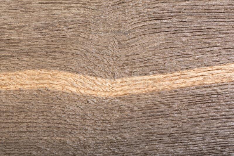 自然老被抓的木板沼泽橡木美好的纹理  库存照片