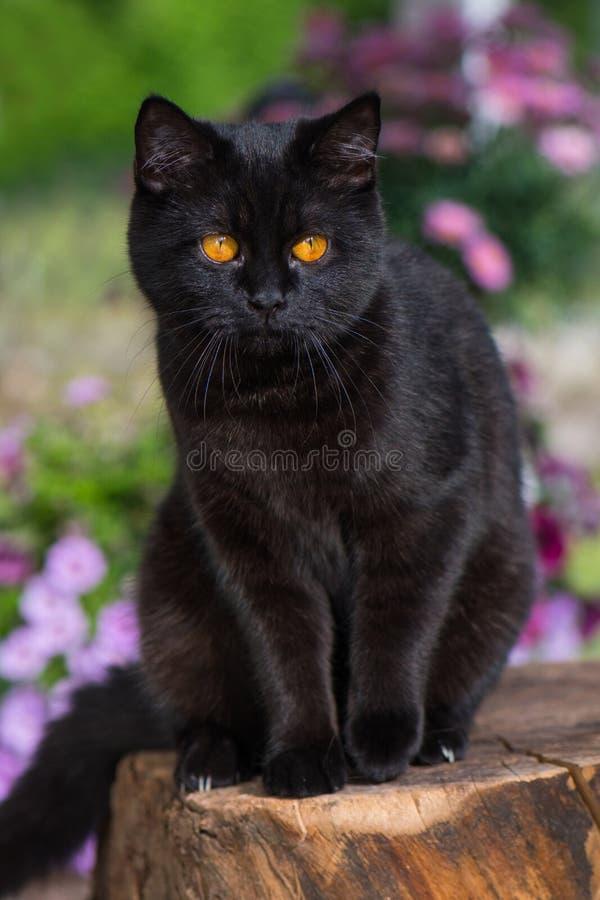 自然背景中的短胸猫 免版税库存图片