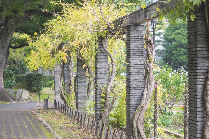 自然背景有传统日本庭院看法  库存照片