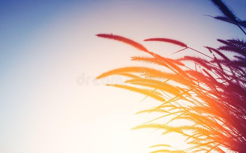 自然背景概念-草花剪影在日落的 免版税图库摄影