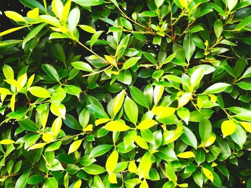 自然背景的概念 绿色灌木树在publi 免版税库存照片