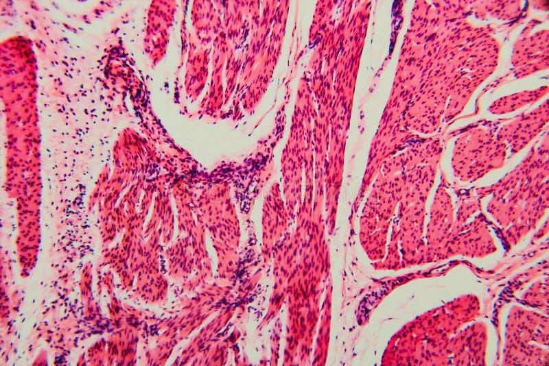 自然背景细胞膀胱猫 库存照片