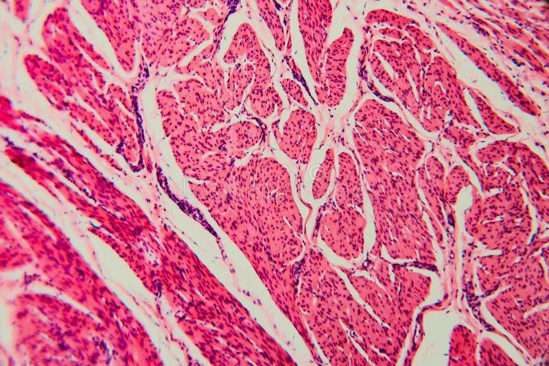 自然背景细胞膀胱猫 图库摄影