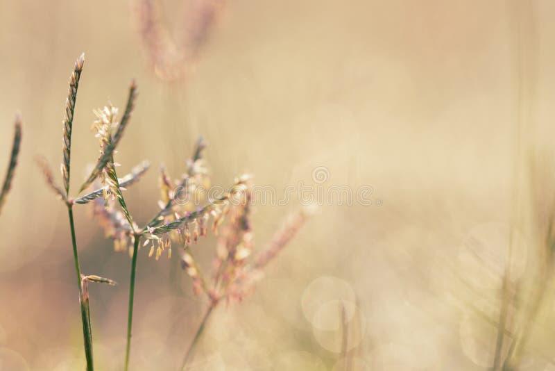自然背景,春天在草的早晨露水 库存照片