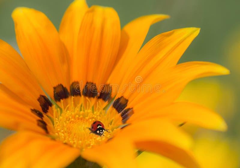 自然背景,黄色花 库存图片