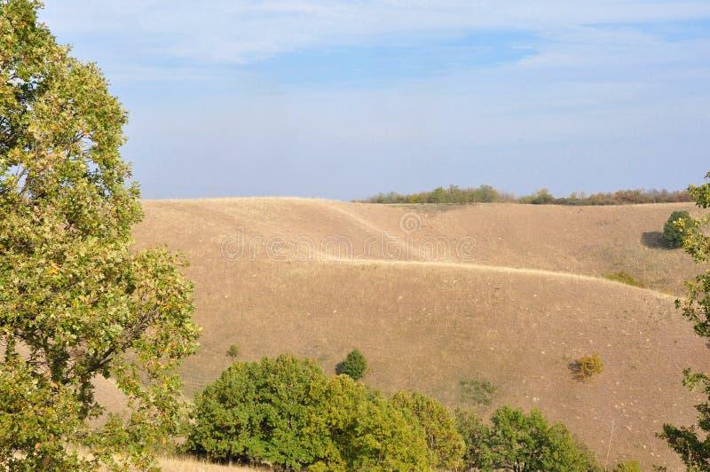 自然艺术在Deliblato沙子的 免版税库存照片
