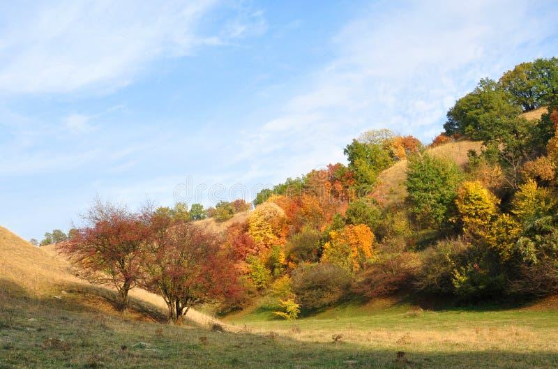 自然艺术 秋天的颜色 免版税库存图片