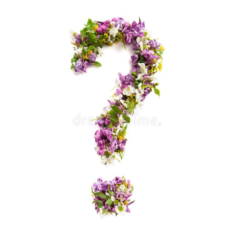 自然草甸花和丁香问号在白色ba 免版税库存图片