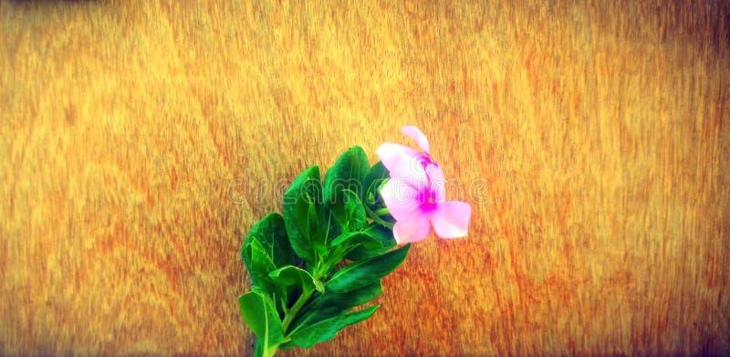 自然荔枝螺花木背景 库存图片