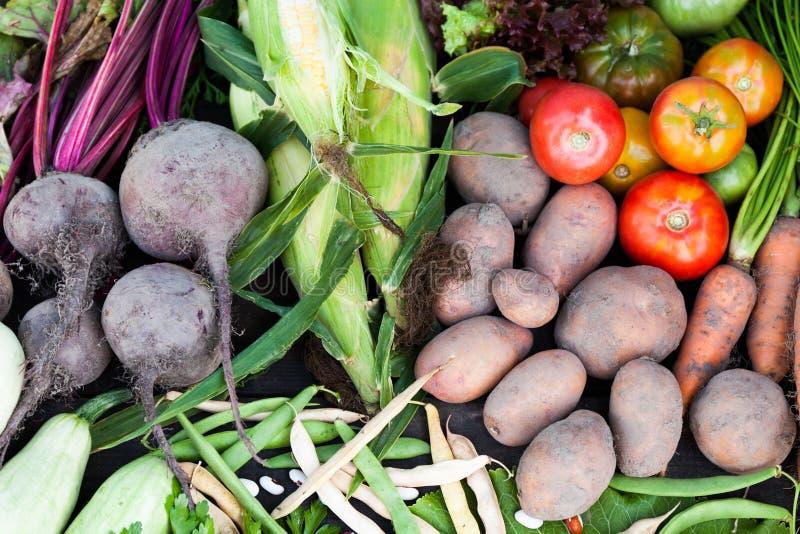 自然菜有机收获,新鲜的农业食物 免版税库存照片