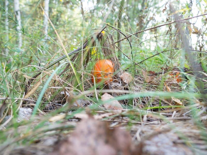 自然蘑菇 免版税库存照片