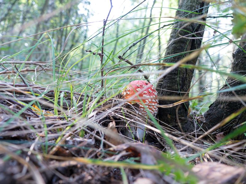 自然蘑菇 库存图片