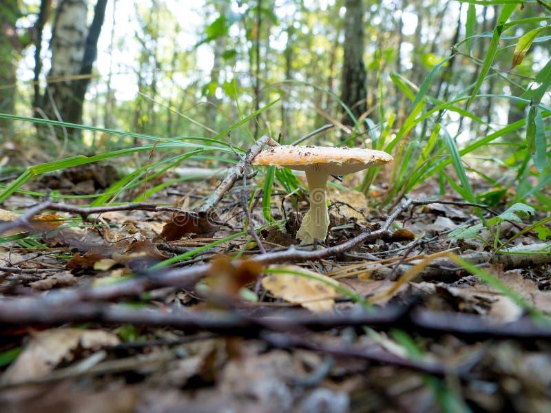 自然蘑菇 免版税库存图片