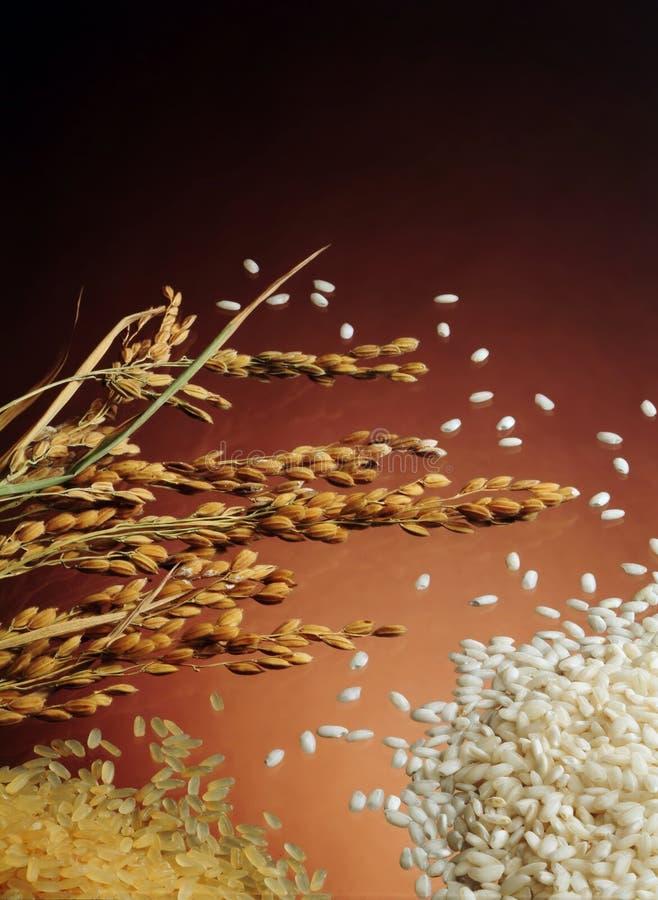 Download 自然被堆的米 库存图片. 图片 包括有 健康, 意大利煨饭, 碳水化合物, 自然, 卡路里, 捷克人, 厨师 - 300841
