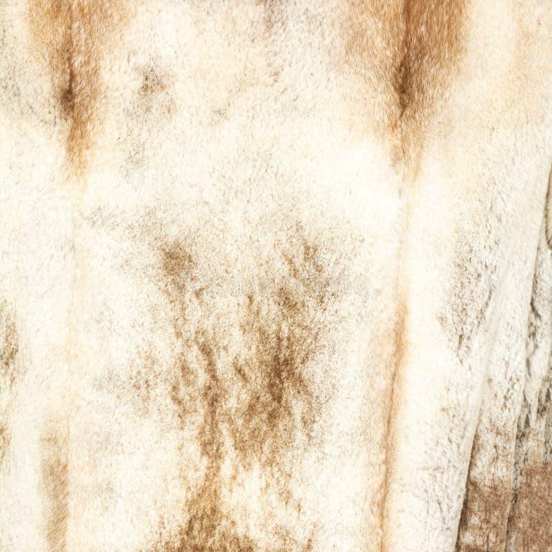自然被察觉的米黄棕色发光的毛皮纹理  免版税图库摄影