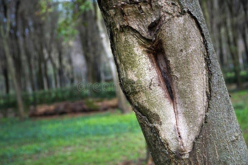 自然被雕刻的爱心脏 库存图片