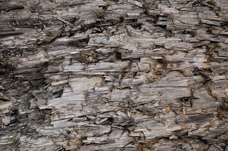 自然被风化的灰色灰褐色布朗裁减树桩纹理,大水平的详细的受伤的损坏的被破坏的灰色背景 库存图片