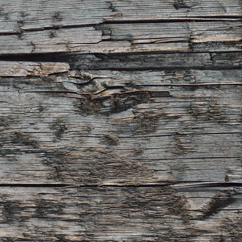 很老的粗��_破裂的被破坏的粗纹乌贼属木纹理,大详细的老年迈的灰色木材