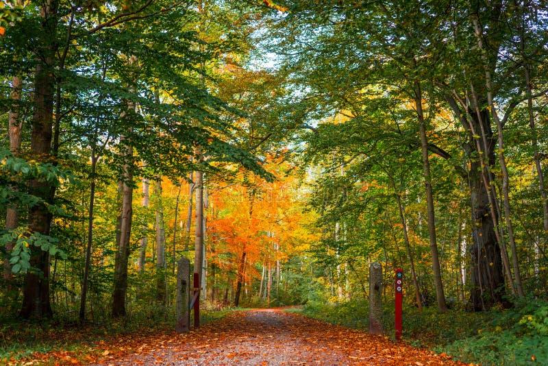 自然道路在丹麦森林里秋天 库存图片